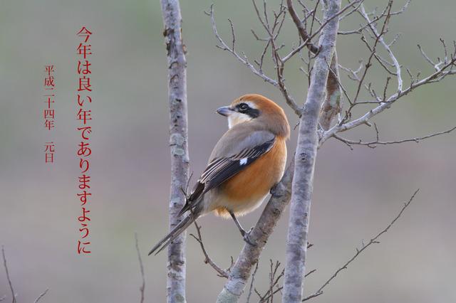 Mozugantan1_2