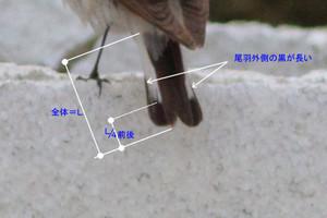 Segurosabakuobane2405091