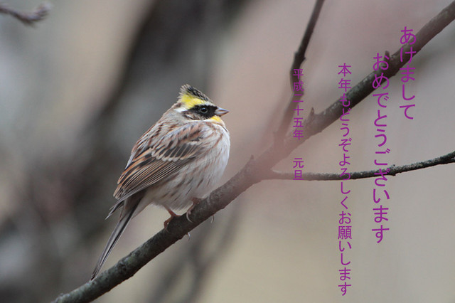 Miyamahojironenga2412291_3
